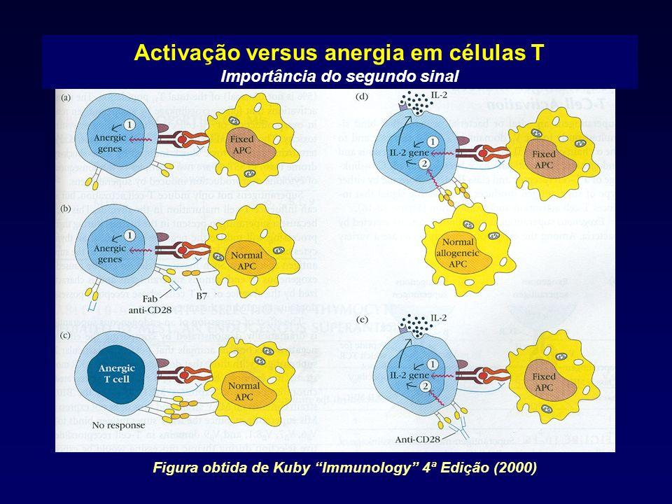 Activação versus anergia em células T