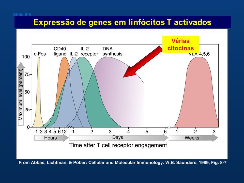 Expressão de genes em linfócitos T activados
