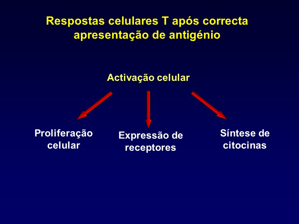 Respostas celulares T após correcta apresentação de antigénio