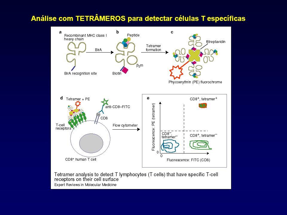 Análise com TETRÂMEROS para detectar células T específicas