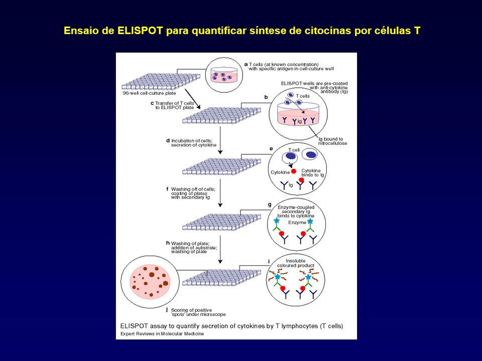 Ensaio de ELISPOT para quantificar síntese de citocinas por células T