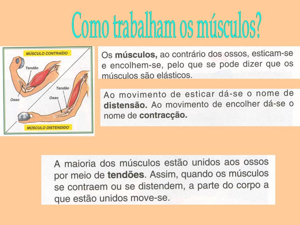 Como trabalham os músculos