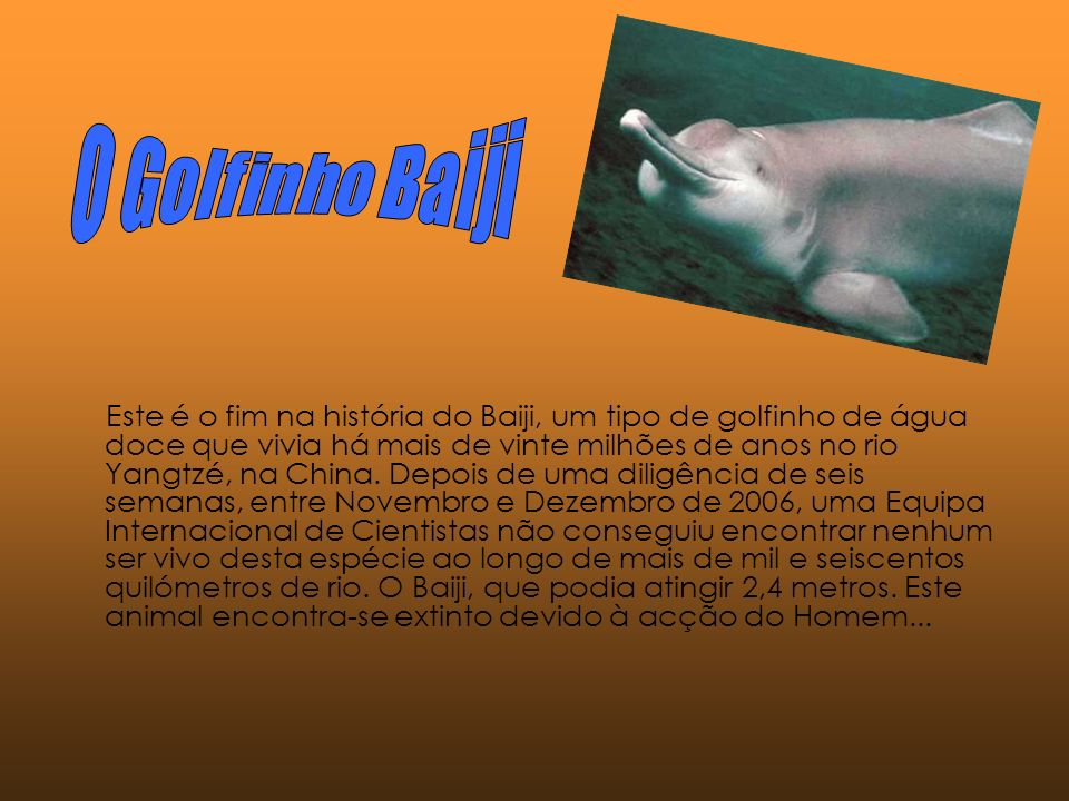 O Golfinho Baiji