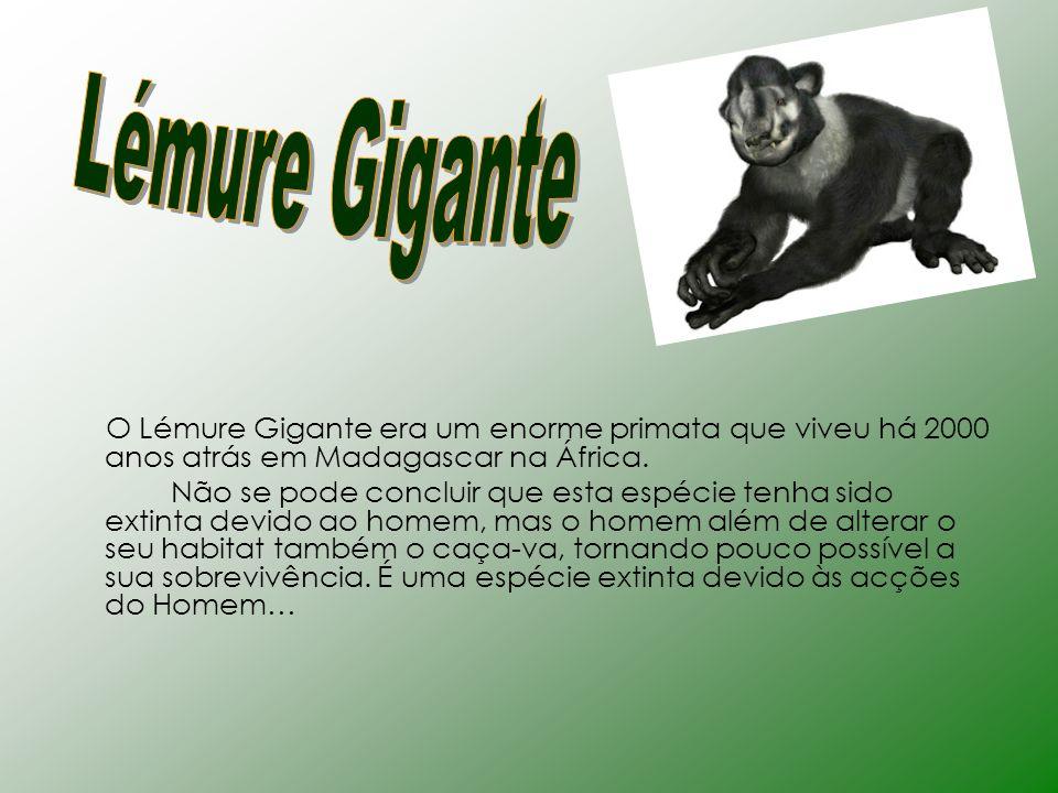 Lémure Gigante O Lémure Gigante era um enorme primata que viveu há 2000 anos atrás em Madagascar na África.
