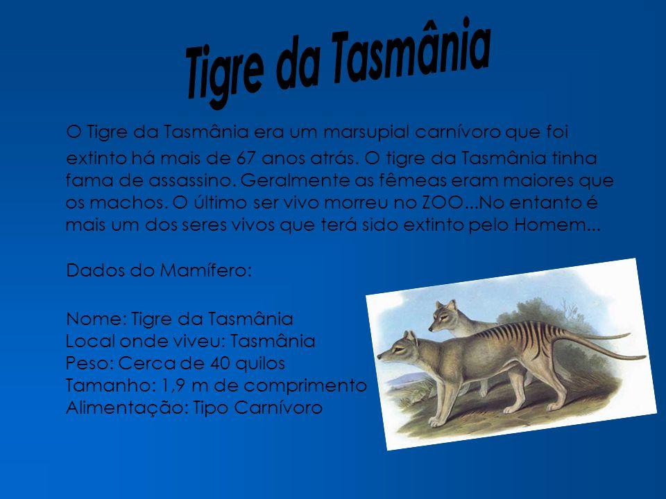 Tigre da Tasmânia O Tigre da Tasmânia era um marsupial carnívoro que foi.