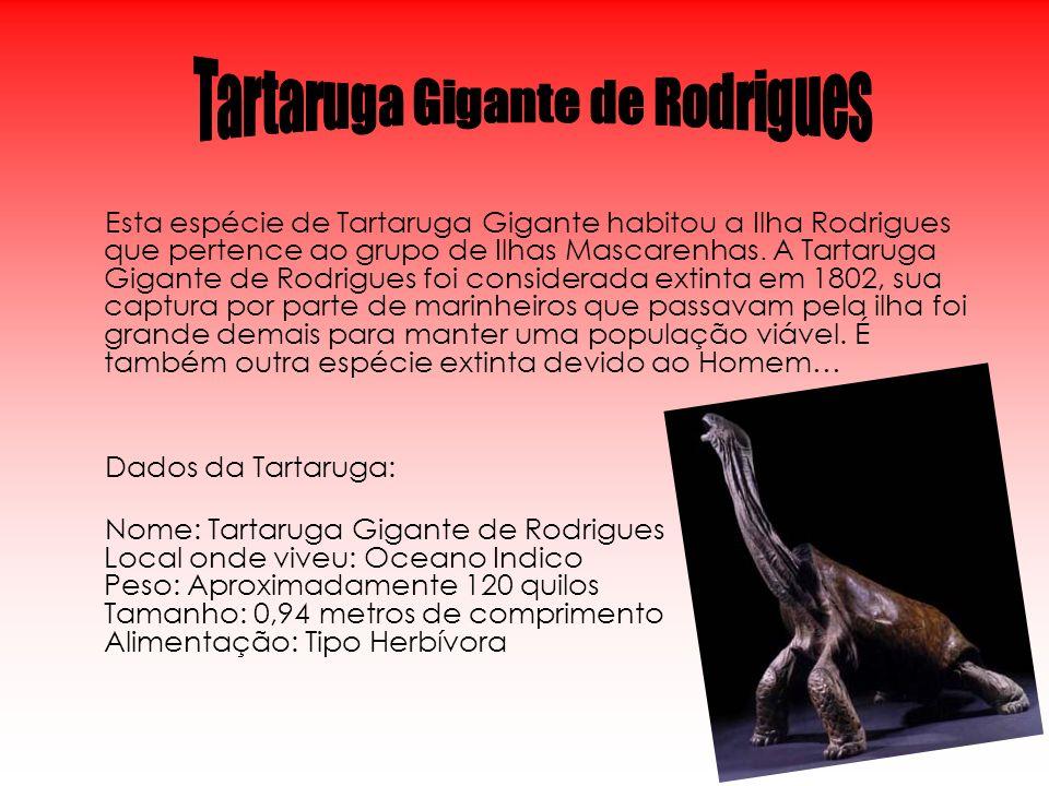 Tartaruga Gigante de Rodrigues
