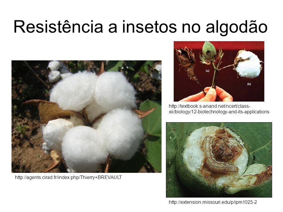 Resistência a insetos no algodão