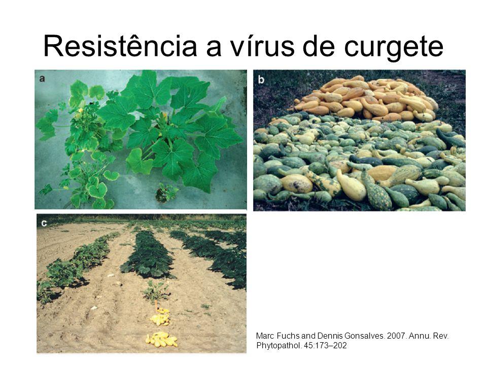 Resistência a vírus de curgete