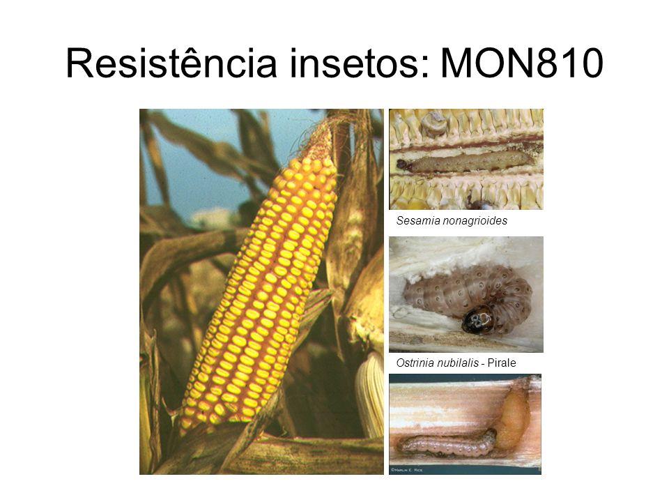 Resistência insetos: MON810