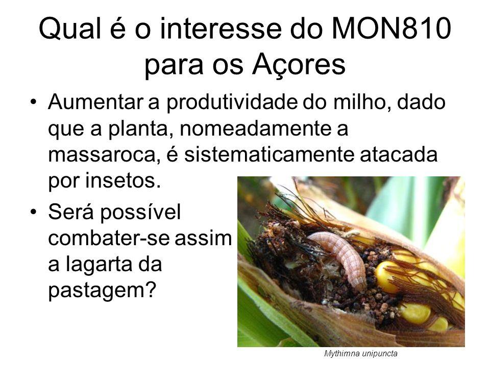Qual é o interesse do MON810 para os Açores