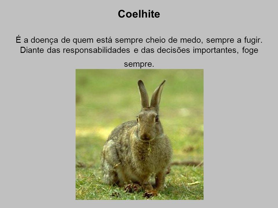 Coelhite É a doença de quem está sempre cheio de medo, sempre a fugir.