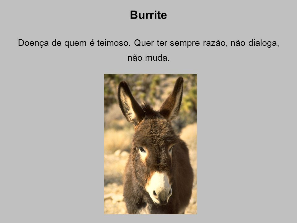 Burrite Doença de quem é teimoso. Quer ter sempre razão, não dialoga, não muda.
