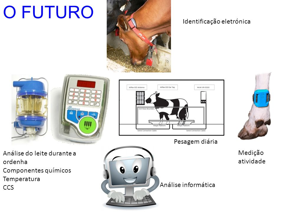 O FUTURO Identificação eletrónica Pesagem diária