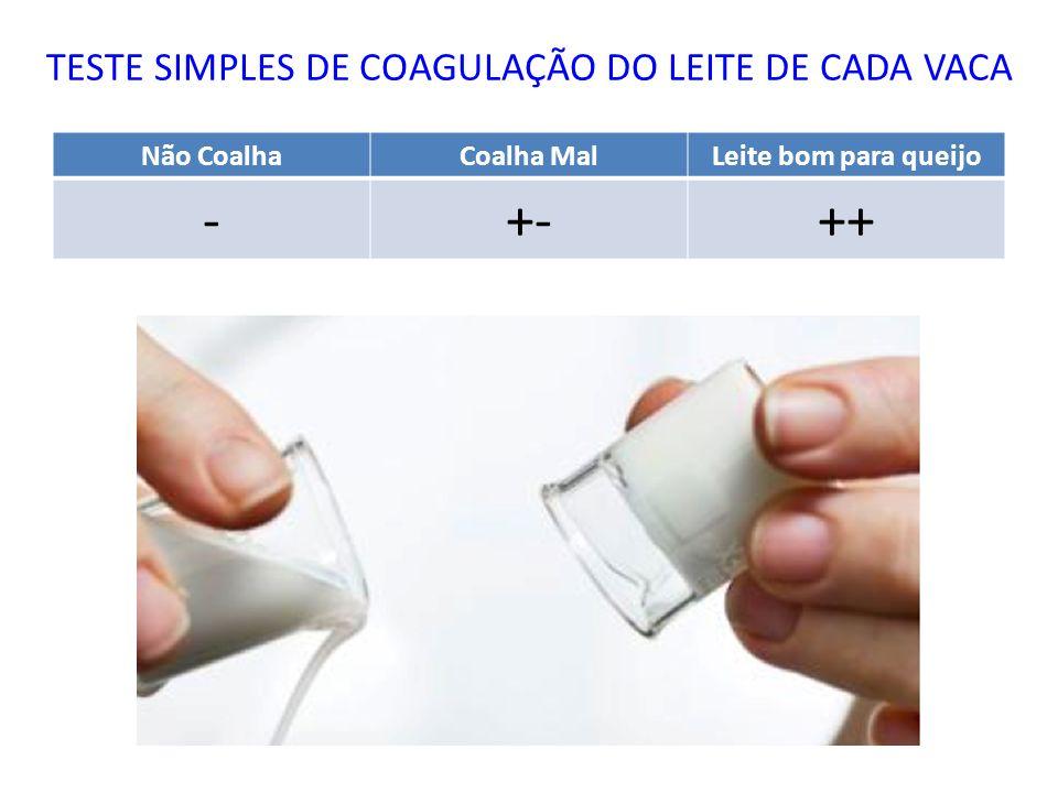 TESTE SIMPLES DE COAGULAÇÃO DO LEITE DE CADA VACA