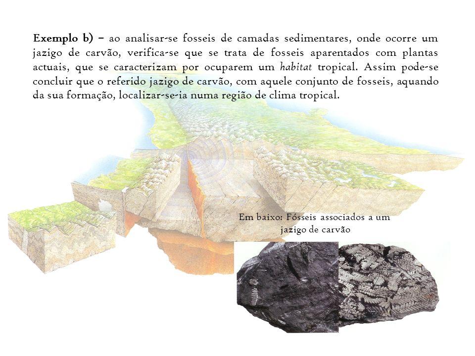 Em baixo: Fósseis associados a um
