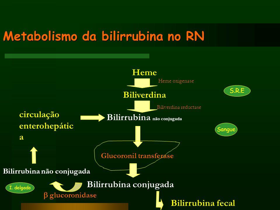 Metabolismo da bilirrubina no RN