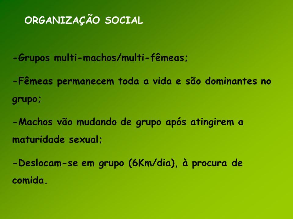 ORGANIZAÇÃO SOCIAL -Grupos multi-machos/multi-fêmeas; -Fêmeas permanecem toda a vida e são dominantes no grupo;