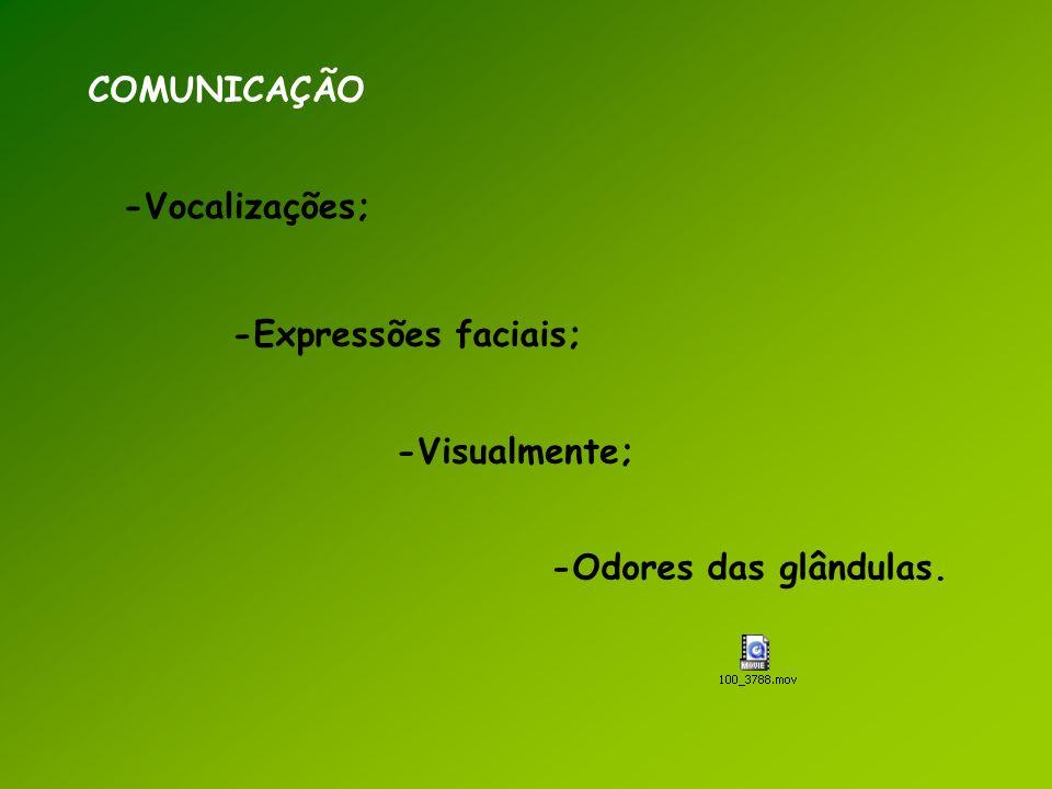 COMUNICAÇÃO -Vocalizações; -Expressões faciais; -Visualmente; -Odores das glândulas.