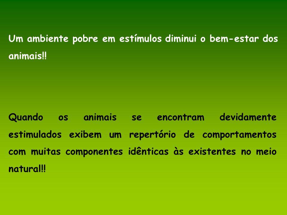 Um ambiente pobre em estímulos diminui o bem-estar dos animais!!