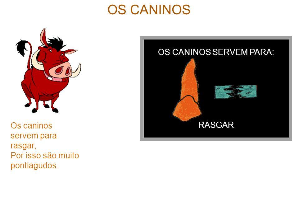 OS CANINOS SERVEM PARA: RASGAR