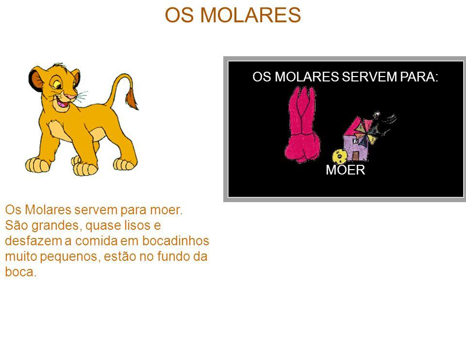 OS MOLARES SERVEM PARA: MOER