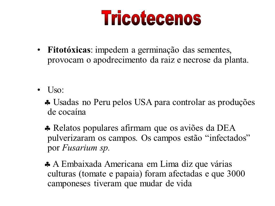 Tricotecenos Fitotóxicas: impedem a germinação das sementes, provocam o apodrecimento da raiz e necrose da planta.
