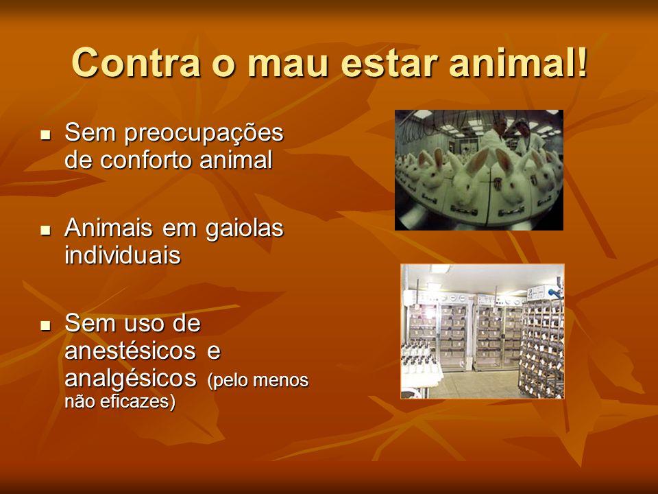 Contra o mau estar animal!