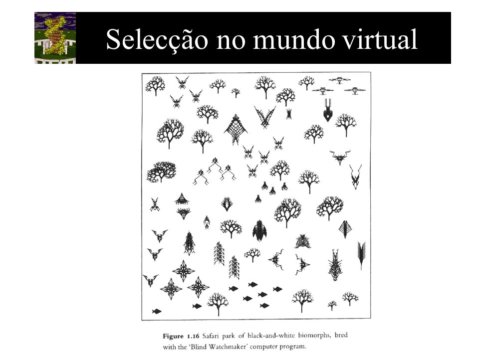 Selecção no mundo virtual