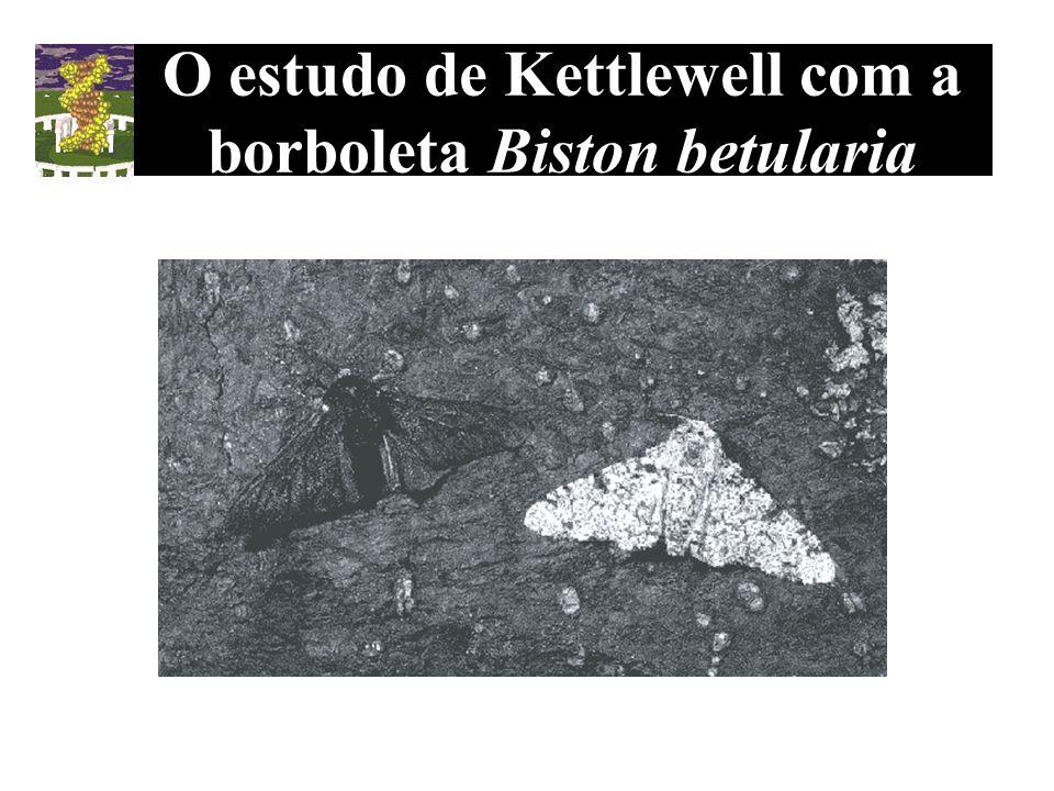 O estudo de Kettlewell com a borboleta Biston betularia