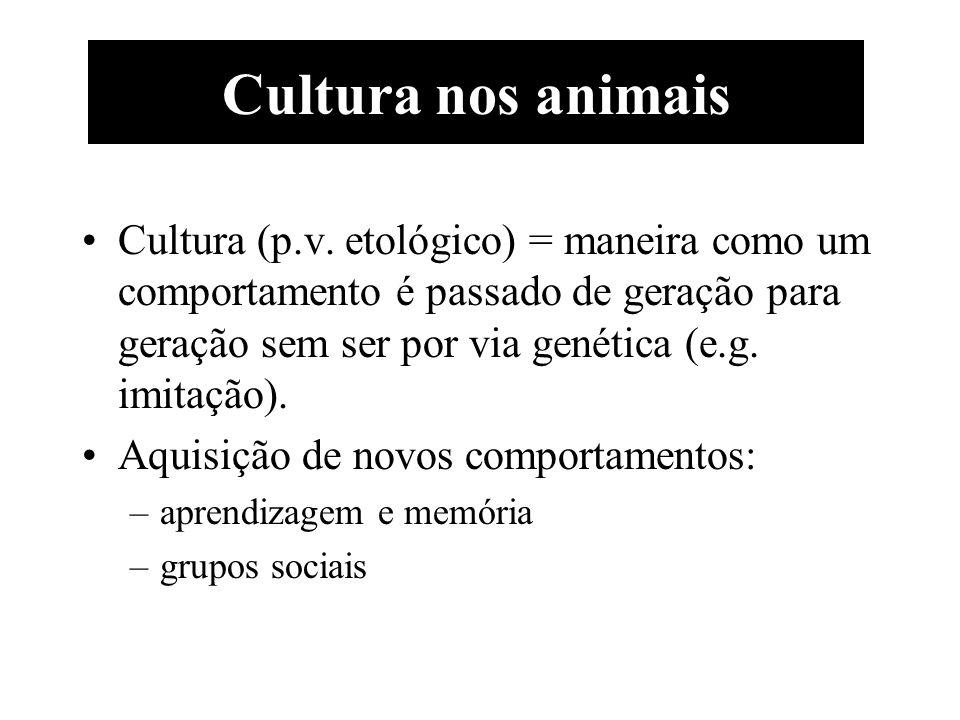 Cultura nos animais