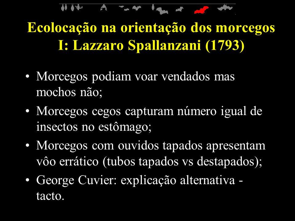 Ecolocação na orientação dos morcegos I: Lazzaro Spallanzani (1793)