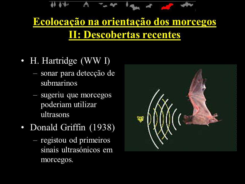Ecolocação na orientação dos morcegos II: Descobertas recentes