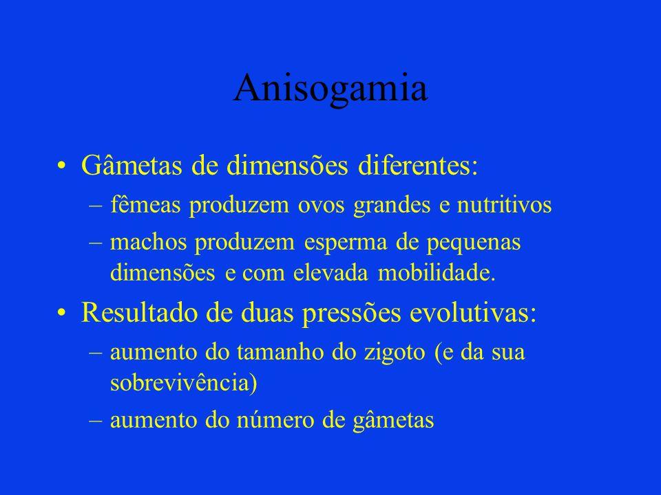 Anisogamia Gâmetas de dimensões diferentes: