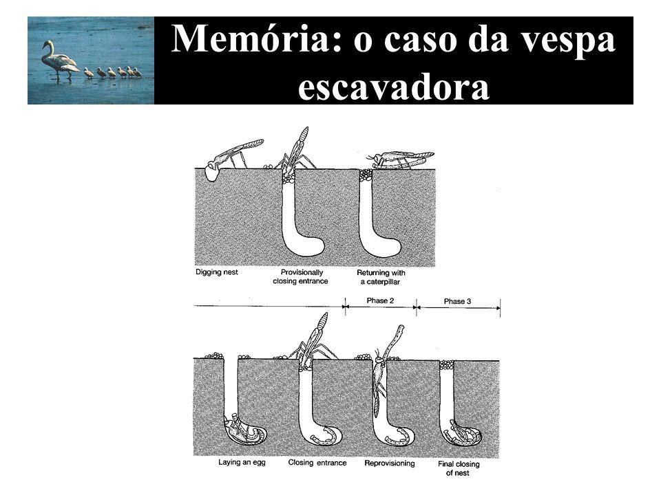 Memória: o caso da vespa escavadora