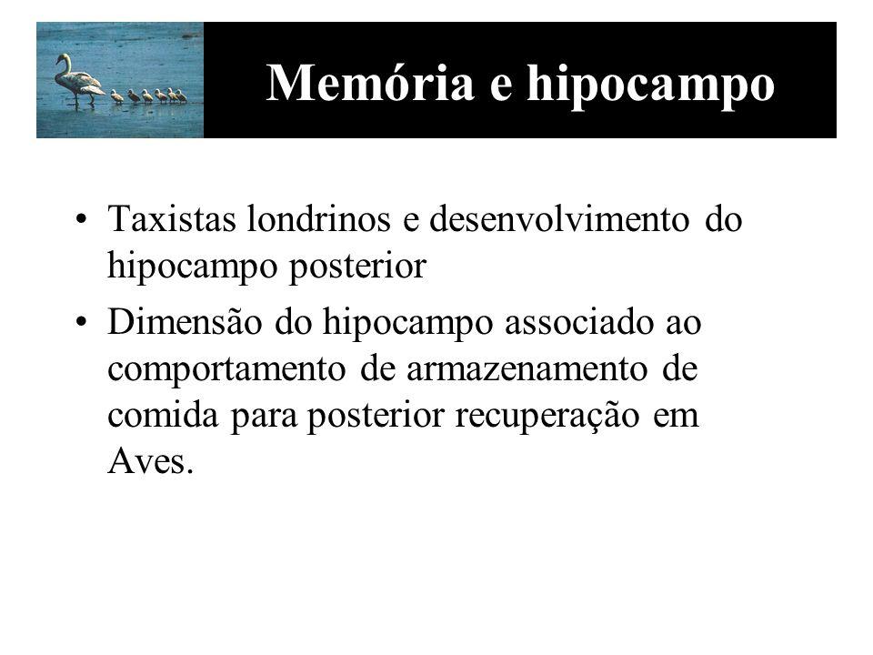 Memória e hipocampo Taxistas londrinos e desenvolvimento do hipocampo posterior.