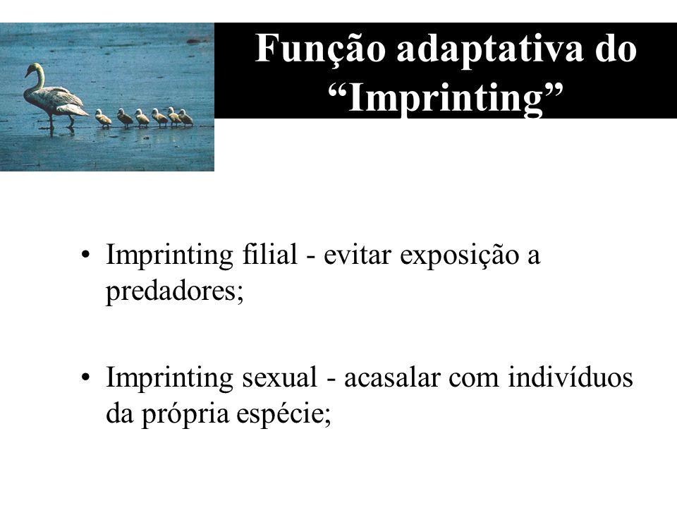Função adaptativa do Imprinting