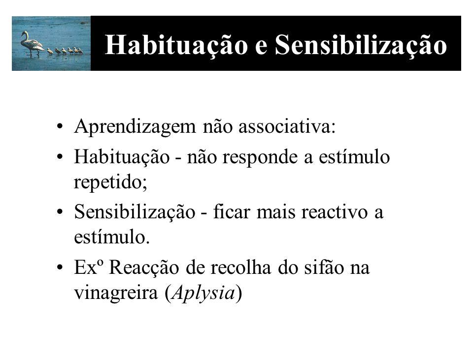 Habituação e Sensibilização