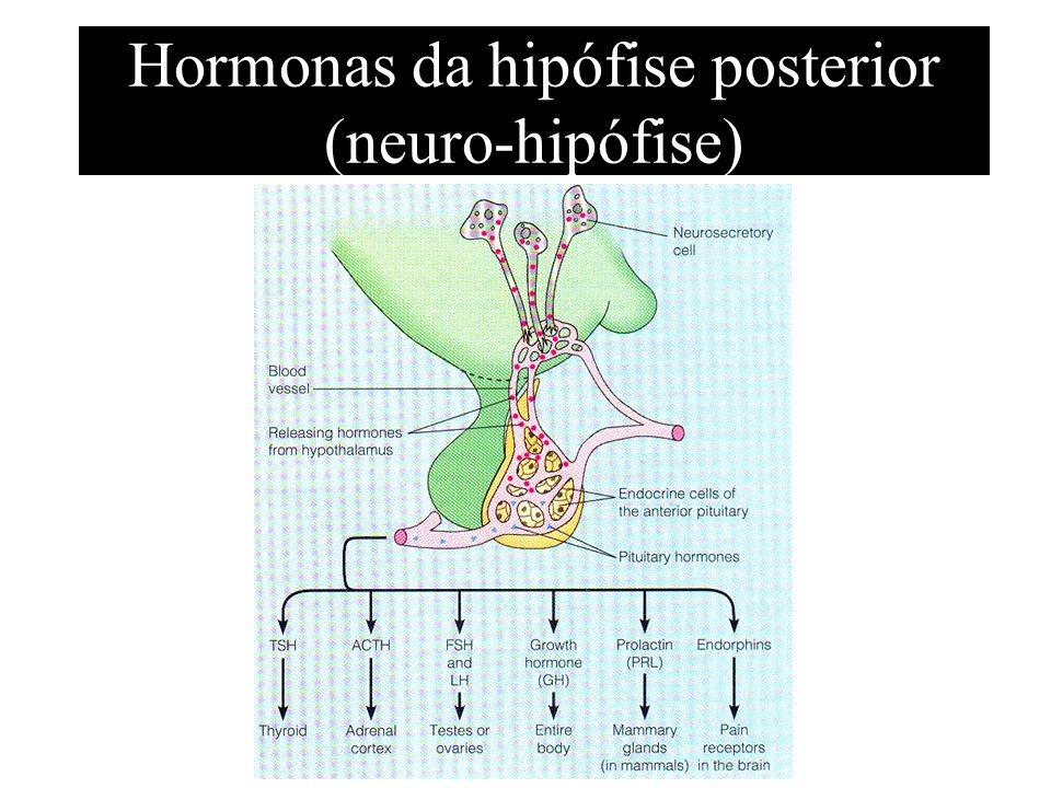 Hormonas da hipófise posterior (neuro-hipófise)