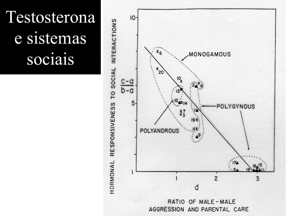 Testosterona e sistemas sociais