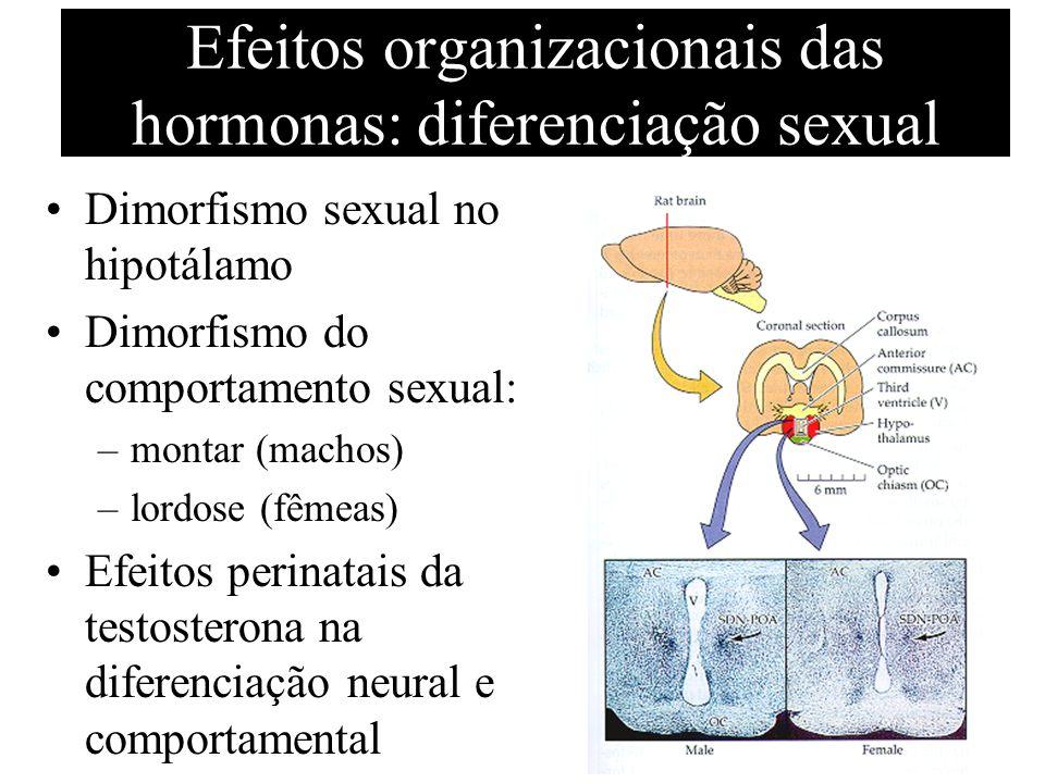 Efeitos organizacionais das hormonas: diferenciação sexual