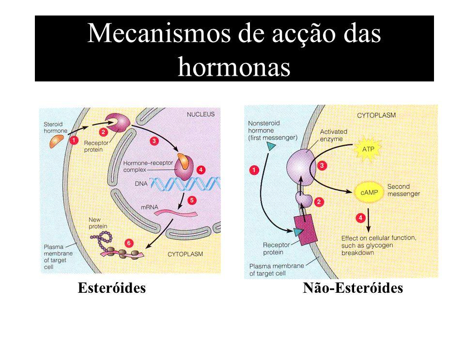 Mecanismos de acção das hormonas