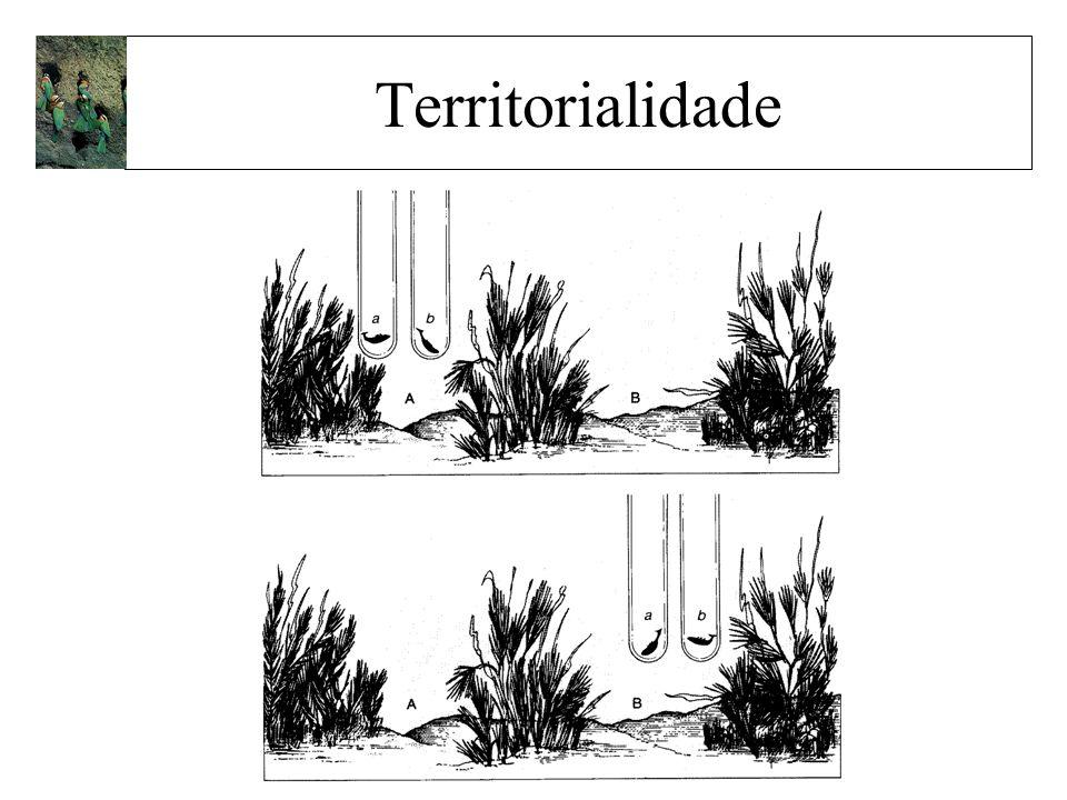 Territorialidade