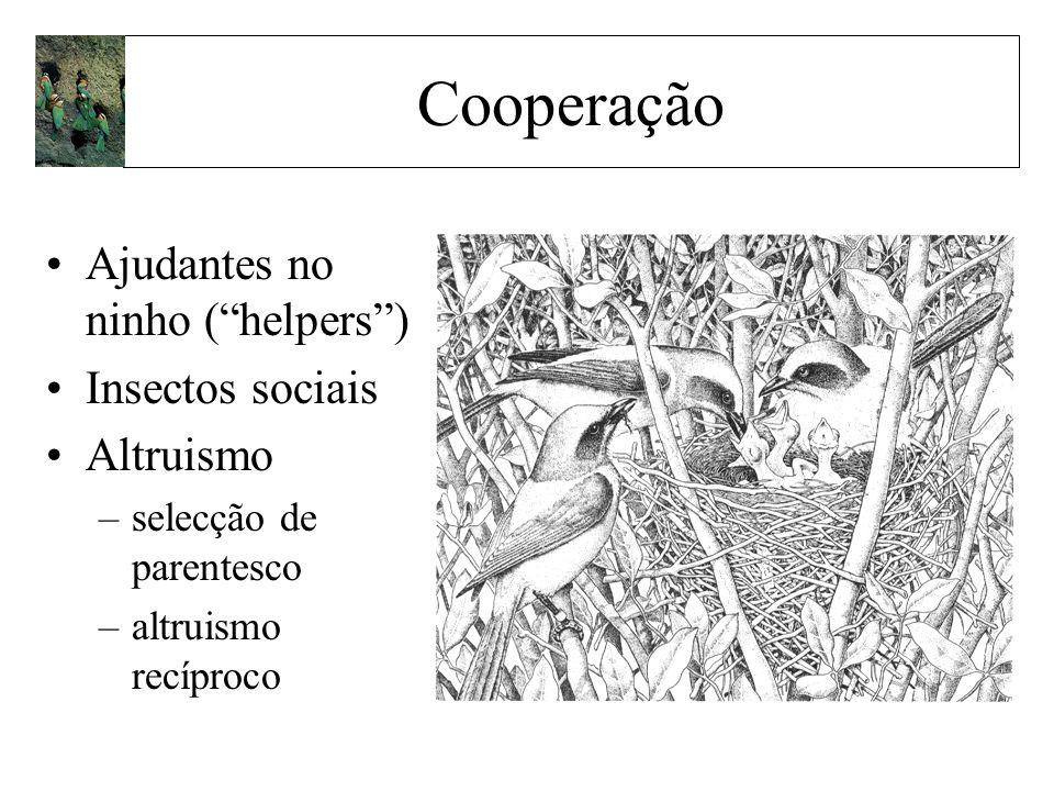 Cooperação Ajudantes no ninho ( helpers ) Insectos sociais Altruismo