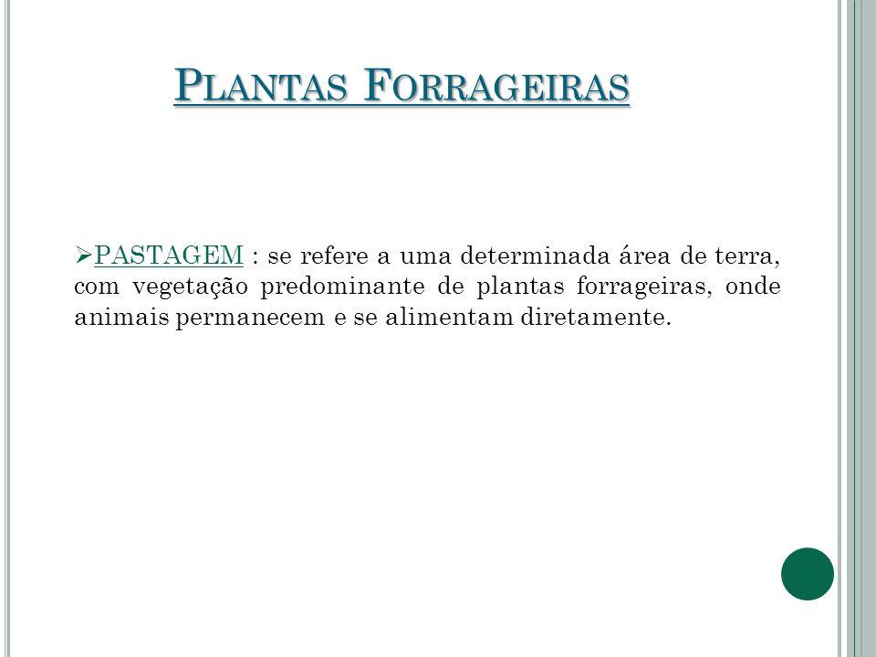 Plantas Forrageiras