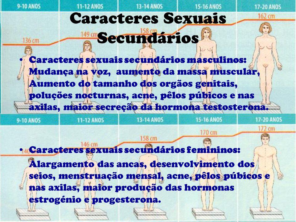 Caracteres Sexuais Secundários