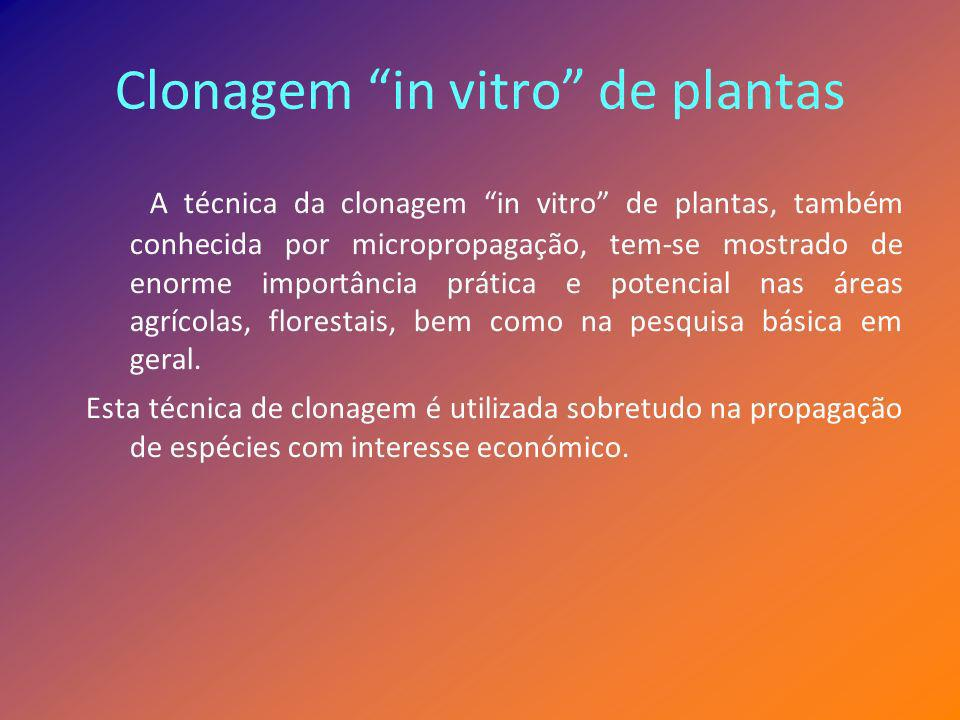 Clonagem in vitro de plantas