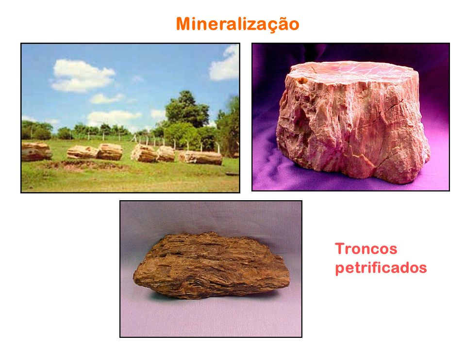 Mineralização Troncos petrificados