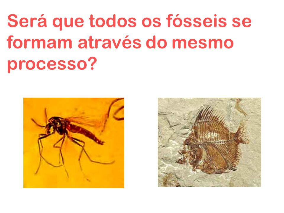 Será que todos os fósseis se