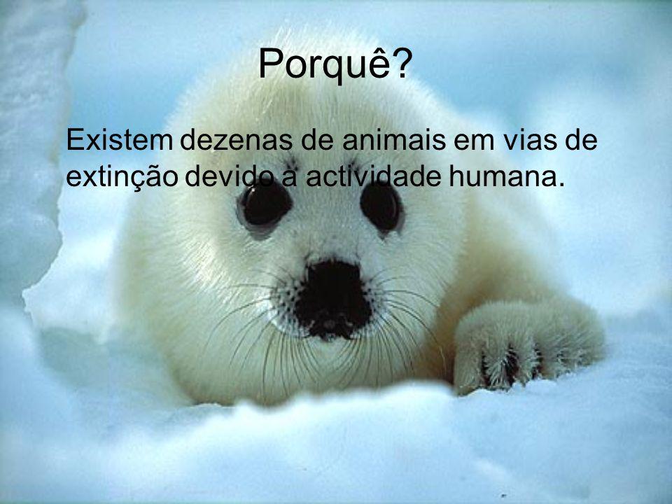 Porquê Existem dezenas de animais em vias de extinção devido a actividade humana.
