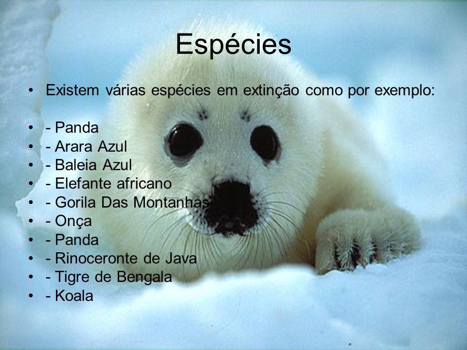 Espécies Existem várias espécies em extinção como por exemplo: - Panda
